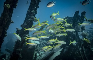 FOTOTAPETY GOATFISH AND BLACKSPOT SNAPPER